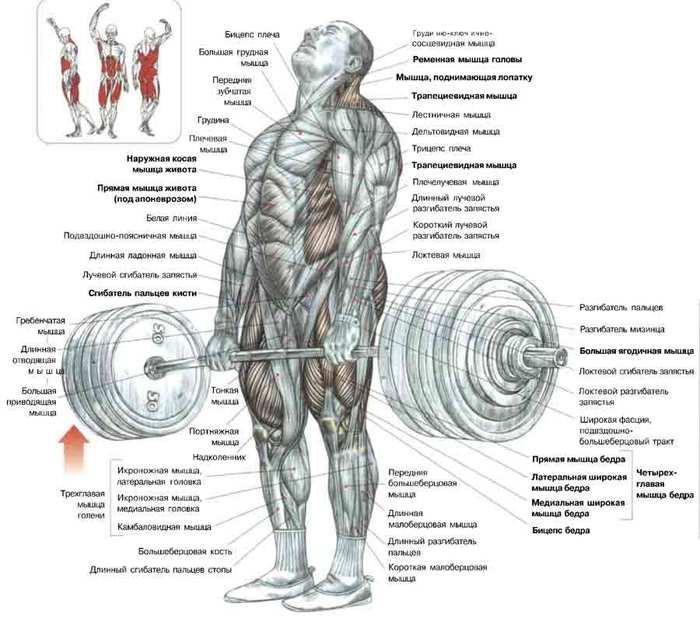Упражнения для накачивания мышц спины в домашних условиях
